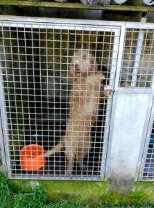 Young female griffon needs urgent adoption
