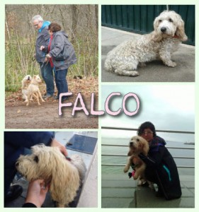 Falco, rescued in Galicia from a kill shelter, now happily adopted by a lovely Dutch couple