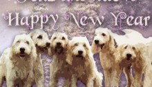 Happy New Year from Adopt a Griffon