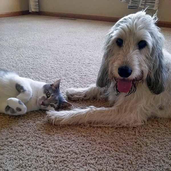 Emma y su gato