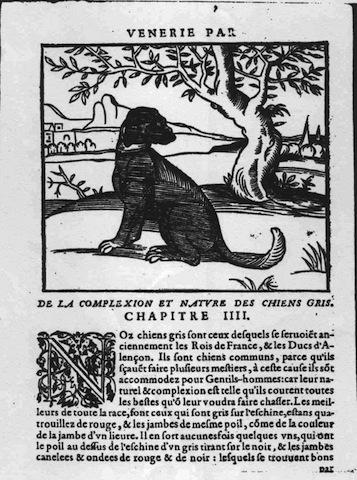 El extinto Perro Gris de San Luis