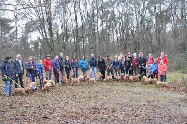 El grupo de Facebook de Basset Leonado de Bretagne de los Paises Bajos organiza paseos varias veces al ańo.