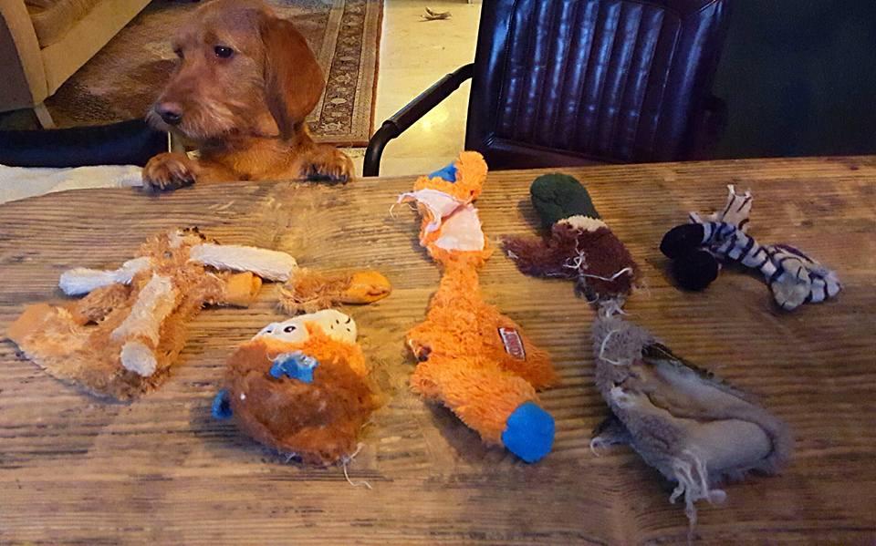 Otto, el asesino de peluches